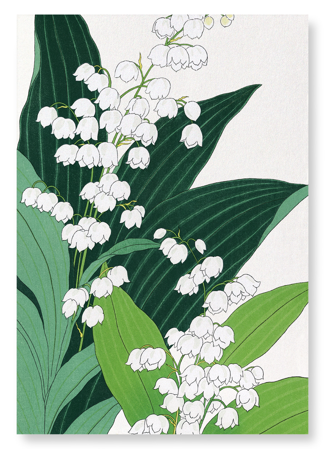 Lily of the valley: 2xPrints