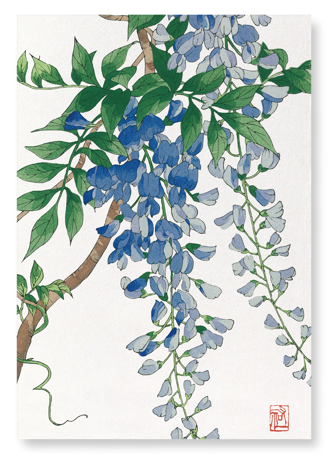 Blue wisteria: 2xPrints