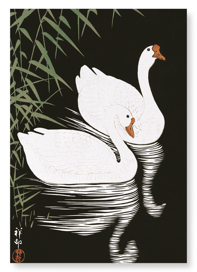 Geese by reed: 2xPrints