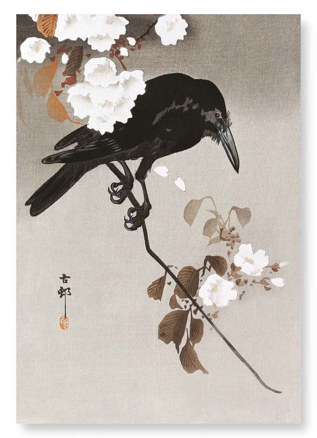 Crow with cherry blossom: 2xPrints
