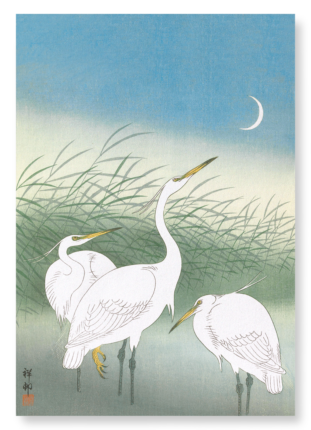 HERONS IN SHALLOW WATER: 2xPrints