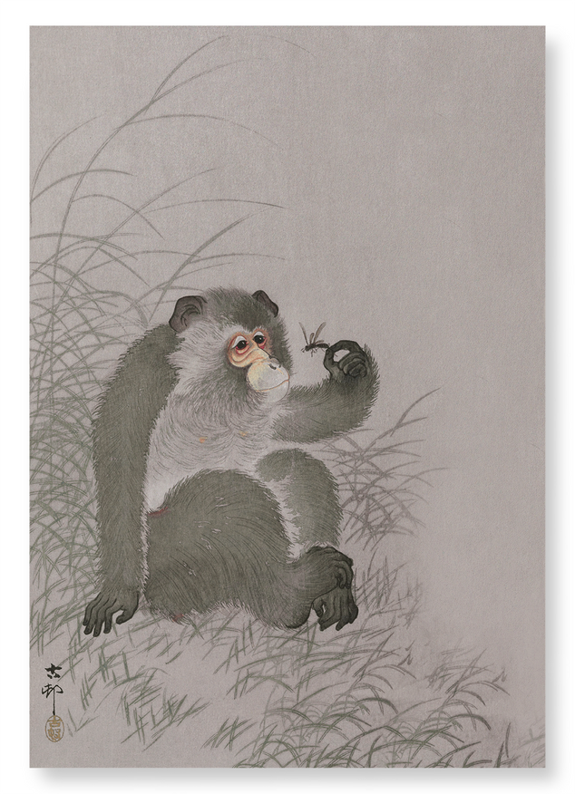Monkey with insect: 2xPrints