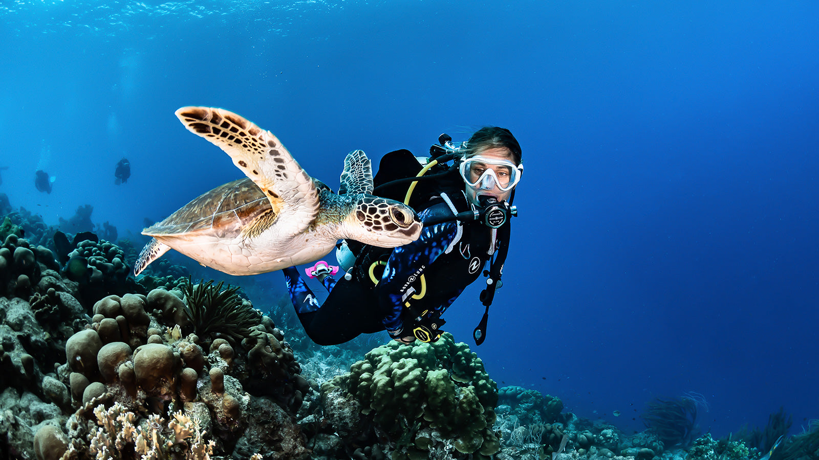 Green Sea Turtle with Scuba Diver