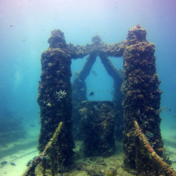 Neptune Memorial Reef Scuba Diving In Miami Fl Best