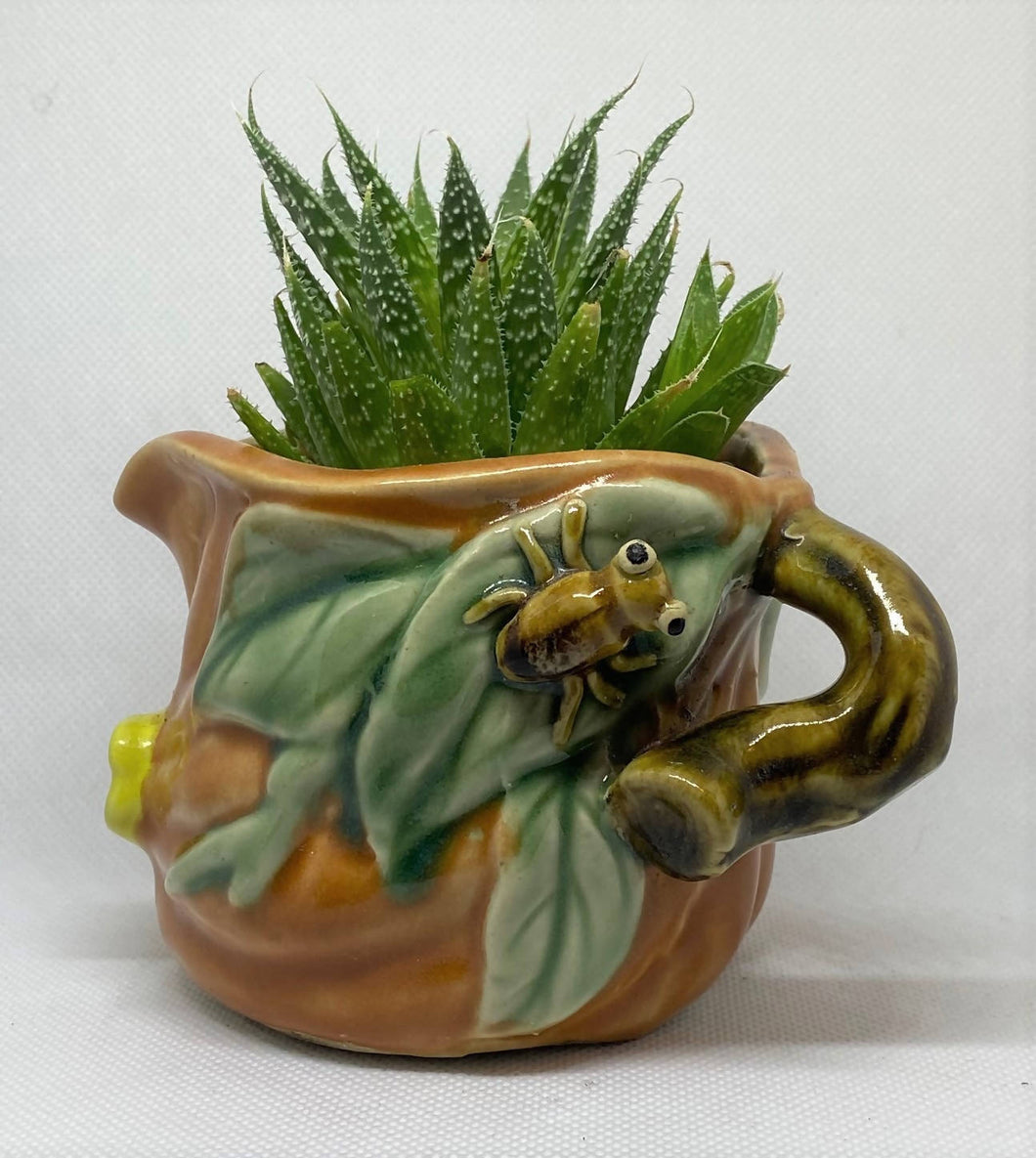 Antique Frog on leaf creamer succulent