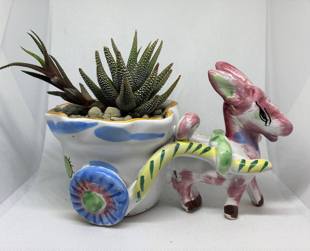 Antique Donkey With Succulent
