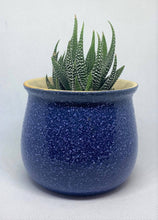 Load image into Gallery viewer, Blue Speckled Succulent
