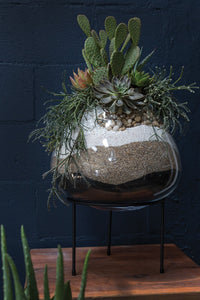 Urban House Terrarium