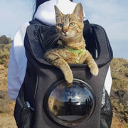 Spacious & Comfortable Cat Backpack