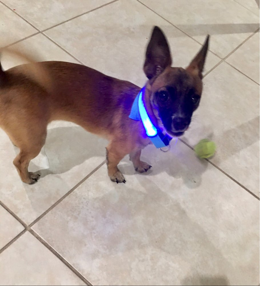 🐶  Led Dog Collar Anti-Lost/Avoid Car Accident Collar For Dogs, Puppies🐶
