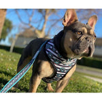 Frenchiestore Luxury Leash | Frenchie Love in Teal