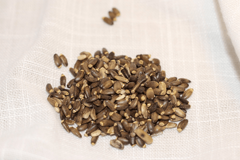 Organic Milk Thistle Seeds