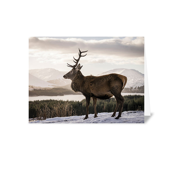 Alzheimer Scotland Deer Christmas card