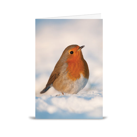 Alzheimer Scotland Robin Charity Christmas Card