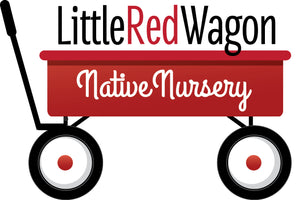 Little Red Wagon Native Nursery