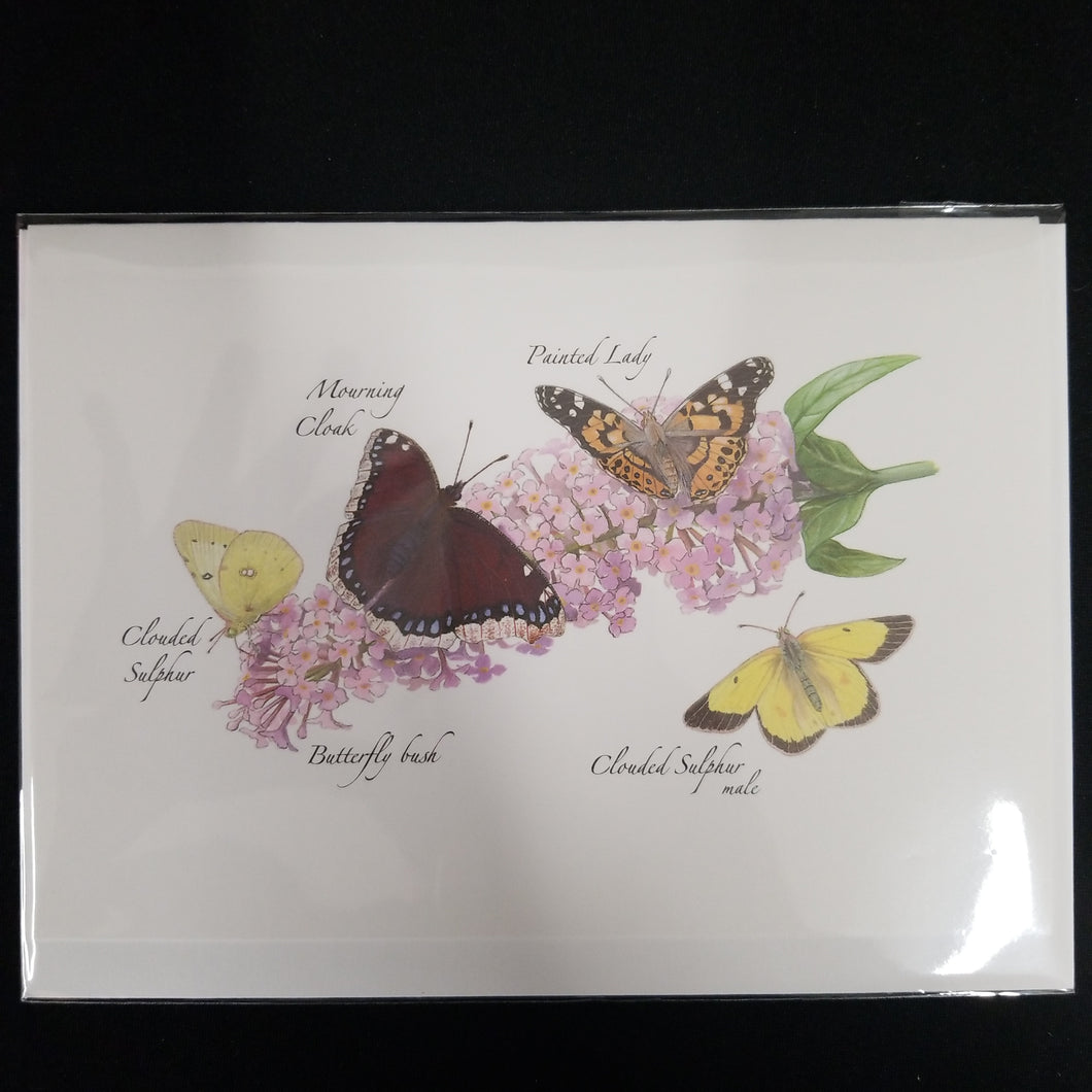Four Butterflies on a Bush card