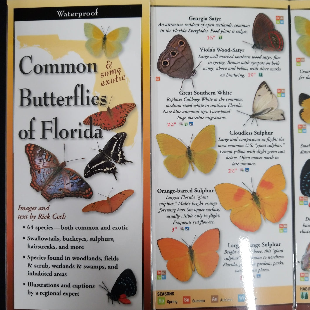 Common Butterflies of Florida Guide