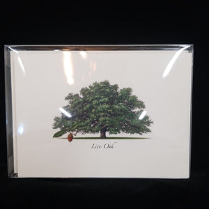 Live Oak Note Cards