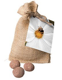 Bee Seed Ball Gift Set