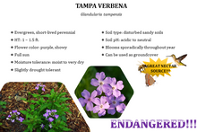 Load image into Gallery viewer, Tampa Verbena - Glandularia tampensis (1 gal.)