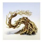 Dragon Bonsai Tree Small