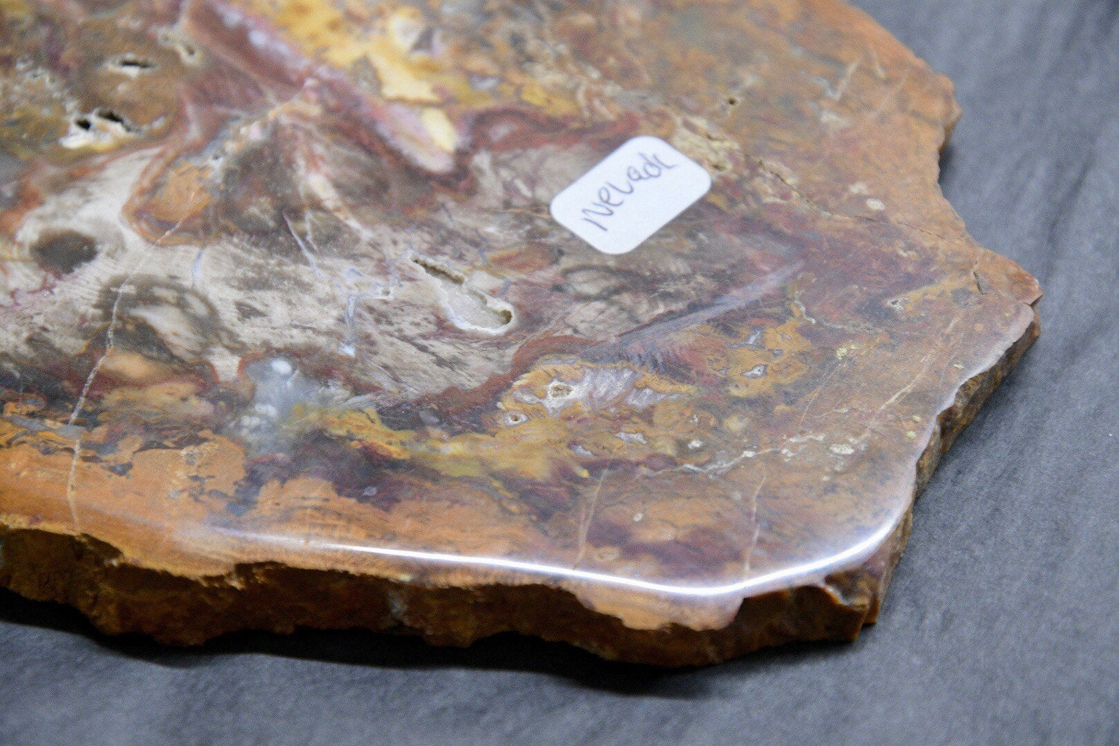 Petrified Wood Slab