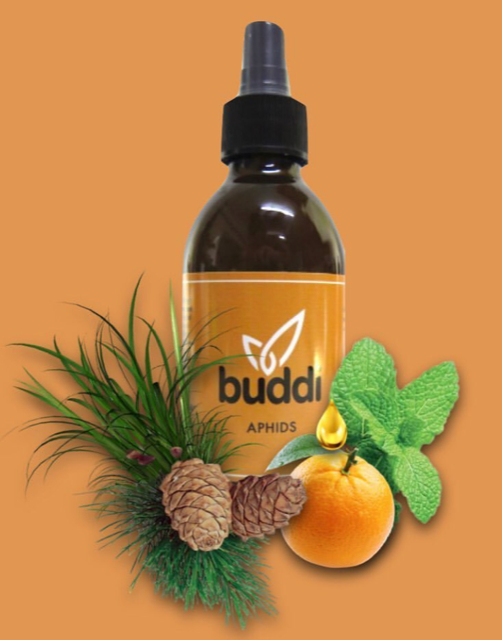 Buddi Organic Pest Control Spray | Aphids 200ml\500ml
