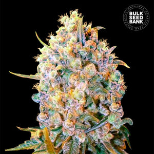 Bigger Bud Feminized 1 Seed