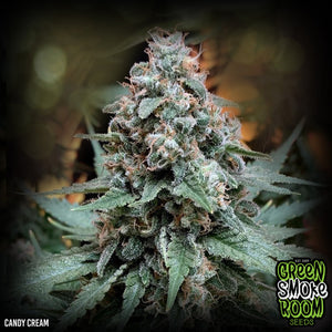 CANDY CREAM FEMINISED SEEDS x 3