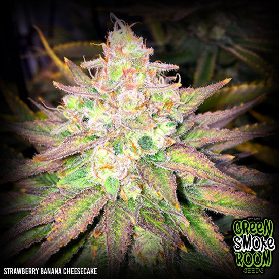 STRAWBERRY BANANA CHEESECAKE FEMINISED SEEDS x 3