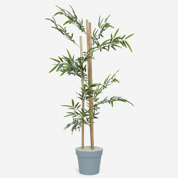 Indoor Decor Plant By Westside Home