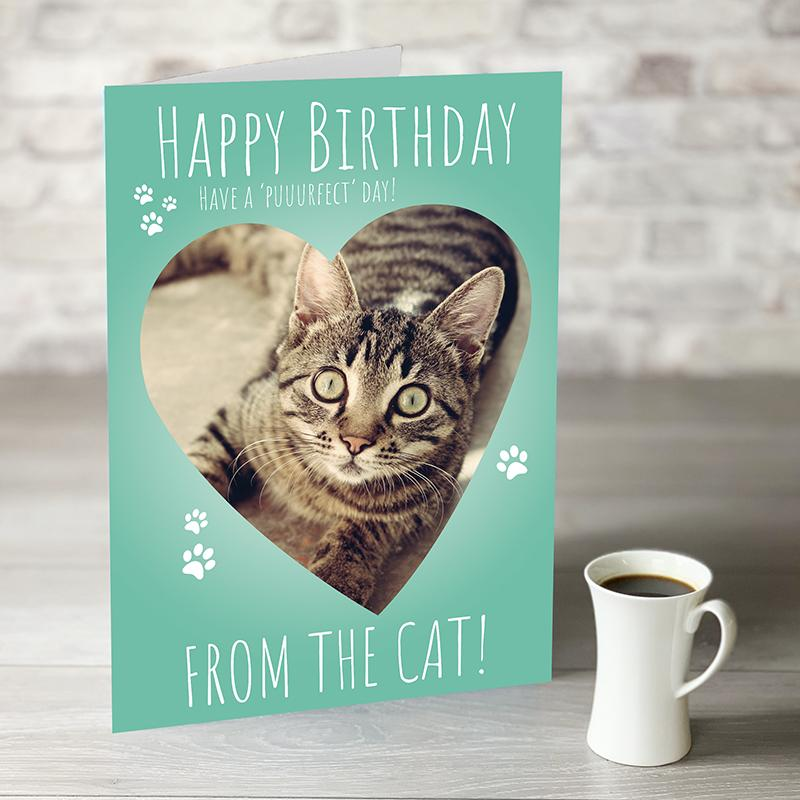NOW ONLY £7.99! Happy Birthday From The Cat