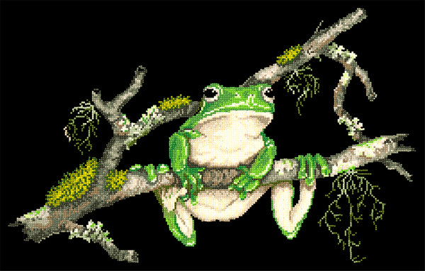 Animals (frogs) - Lee Daynes - Green Tree Frog