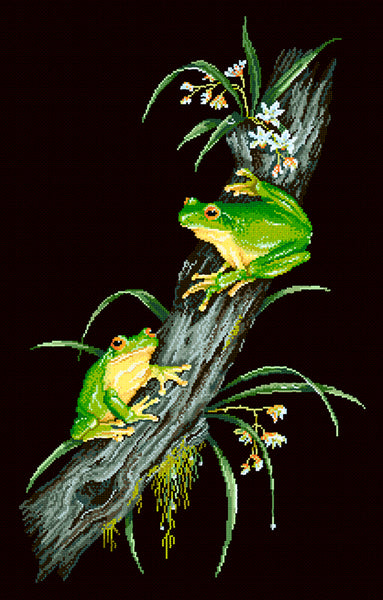 Animals (frogs) - Lee Daynes - Red-eyed Tree Frogs