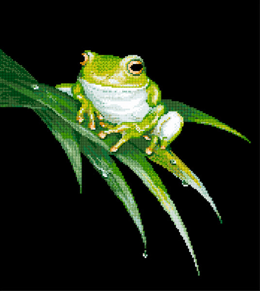 Animals (frogs) - Lee Daynes - White-Lipped Tree Frog I