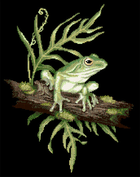 Animals (frogs) - Lee Daynes - White-Lipped Tree Frog II