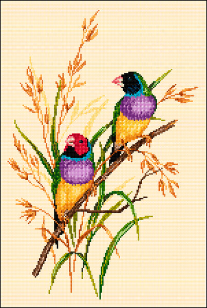 Birds - Lee Daynes - Gouldian Finches