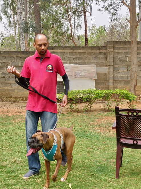 Dog Trainers in Bangalore