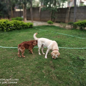 Puppy Socializing with Anvis @ Bangalore