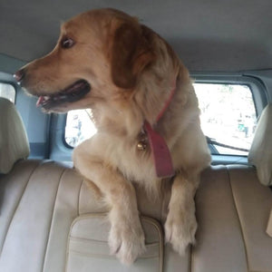 Tails Wagon Pet Cab Services @ Bangalore