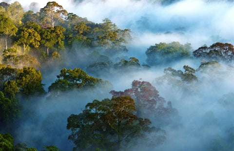 forest reducing carbon emissions
