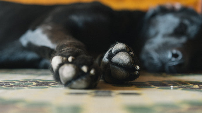Paw Pointers for Your Pup
