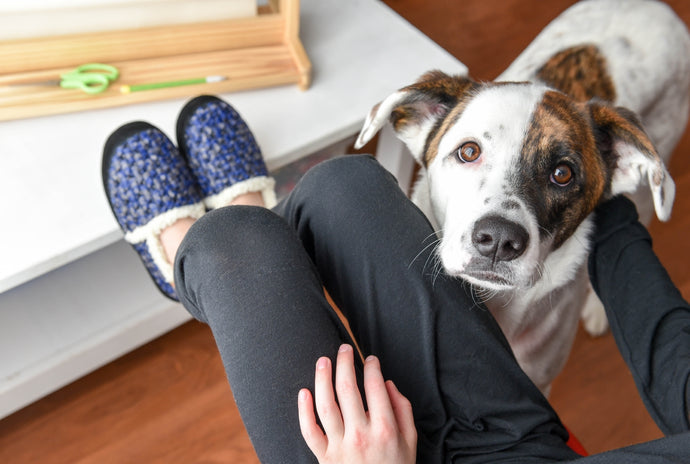 Curing Your Dog's Winter Boredom