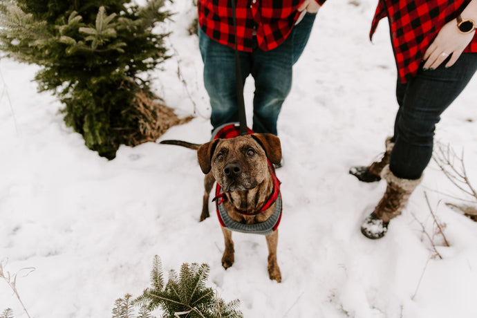 Top Winter Safety Tips for Dogs