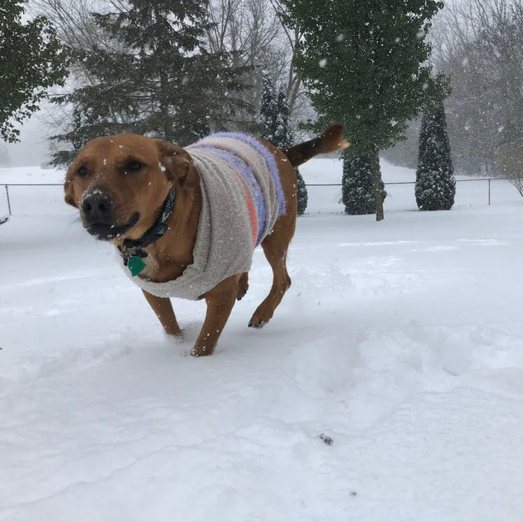 Dog, with a sweater on, running in the snow.