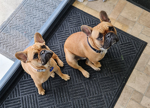 Spud and Bug, two pug dogs sitting on a black mat in front of a door.