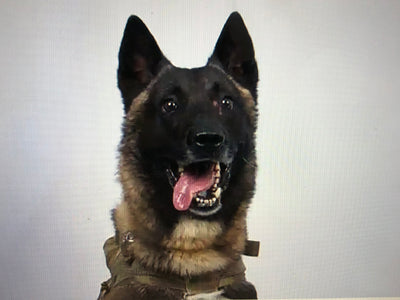 The wonderful' dog that took part in Baghdadi raid!
