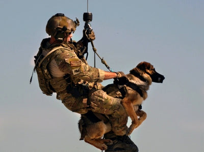 10 Amazing Things About Military Dogs!!