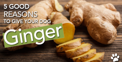 Ginger For An Upset Tummy!