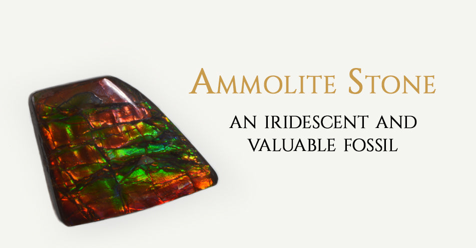 Ammolite Stone an Iridescent and valuable fossil